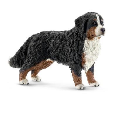 Σκύλος του Βουνού Bernese θηλυκό